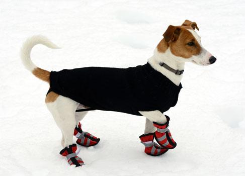 Hund mit Schneeschuhen