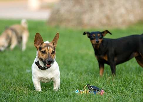 Hunde mit Spielzeug