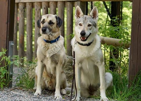 Hunde sitzen