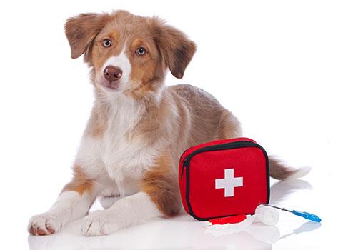 Hund sitzt vor dem Verbandskoffer