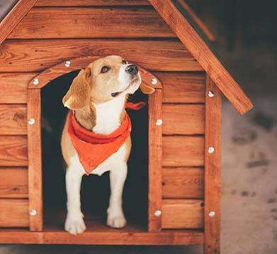 Hund mit roten Halstuch guckt aus einer Hundehütte