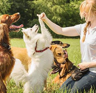 Hunde in der Tagesstätte