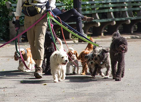 Betreuung von Hunden