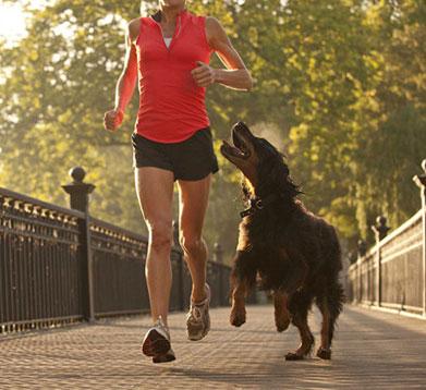 Joggerin mit Hund im Park