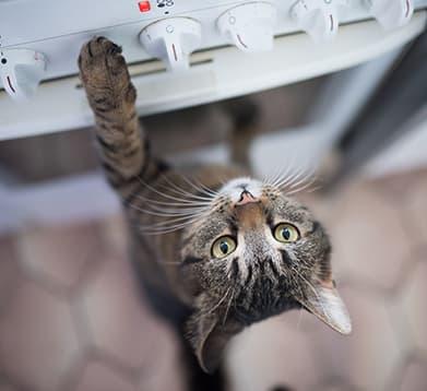Katze will auf den Herd springen