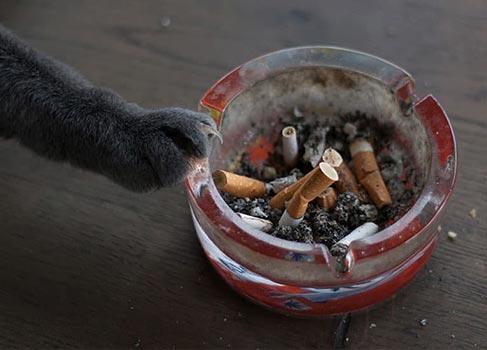 Aschenbecher mit Katzentatze