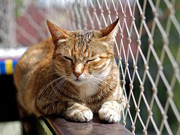 Katze liegt auf dem Balkon