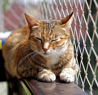Katzes sitzt auf dem Balkongeländer