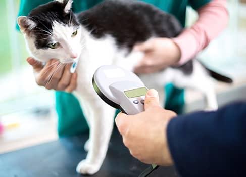 Katze bekommt beim Tierarzt den Chip
