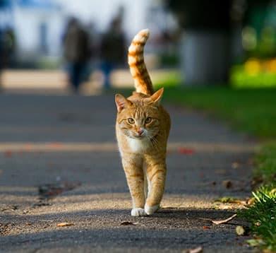 Katze am Straßenrand