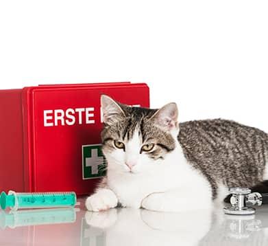 Hausapotheke fuer Katzen