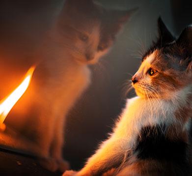 Katze vor der Flamme