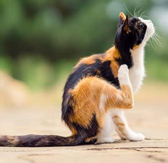 Katze kratzt sich