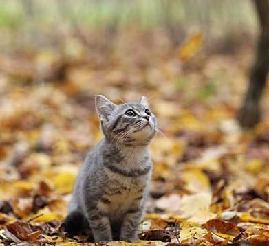 Junges Kätzchen sitzt im Herbstlaub