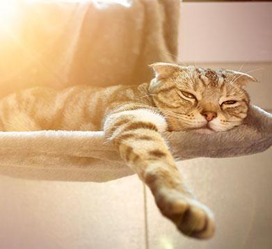 Katze leidet unter Hitze im Sommer