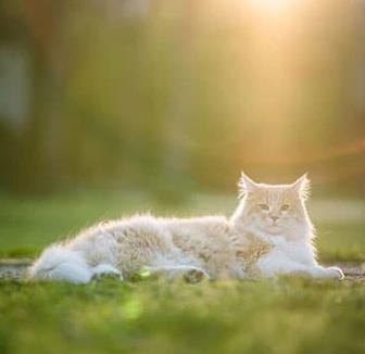 Katze liegt in der Sonne