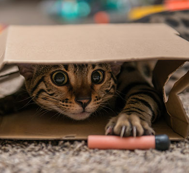 Katze versteckt sich im Karton
