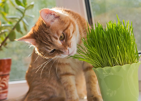 Wirkung: Wie Katzengras hilft
