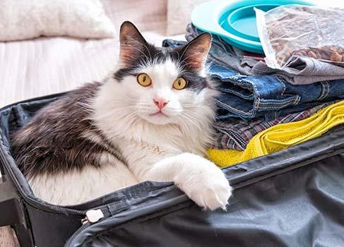 Katze liegt im Koffer