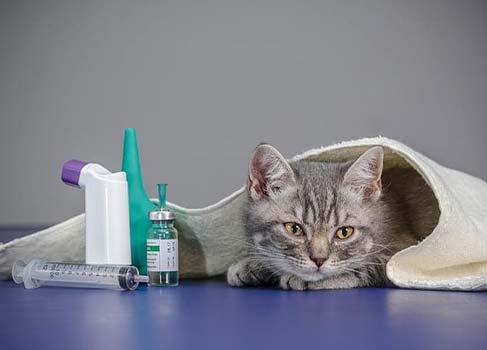 Katze neben Medikamenten