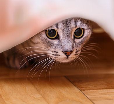 Katze in der Mietwohnung