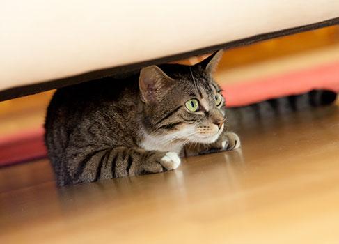 Anhängliche Katze versteckt sich