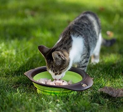 Die Katze frisst beim Nachbarn