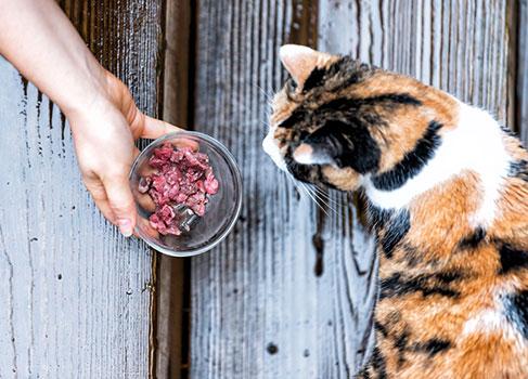 Der Nachbar füttert die Katze