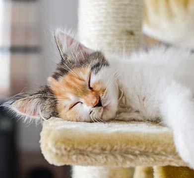 Katze schläft auf dem Kratzbaum