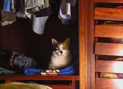 Die Katze hat sich im Schrank versteckt