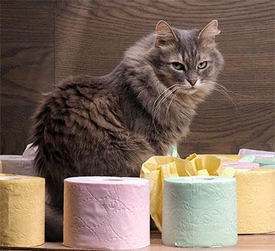 Katze mit Toilettenpapier
