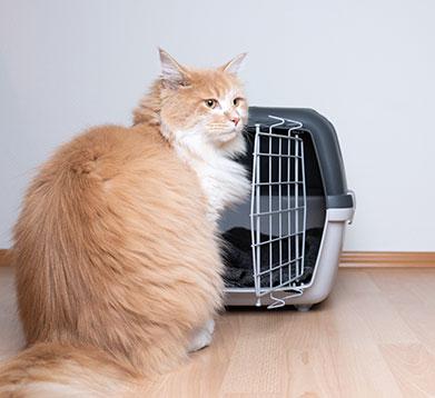 Die Katze will nicht in die Transportbox