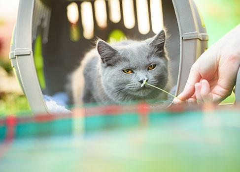 Die Katze sitzt in der Transportbox