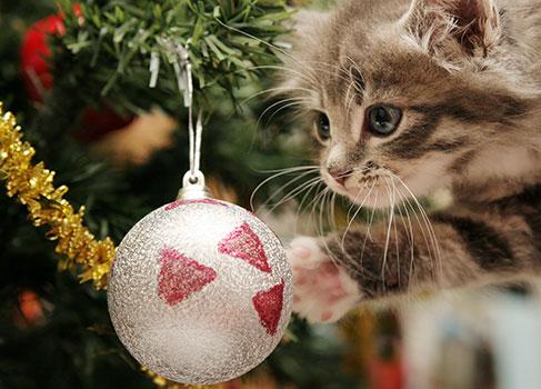 Die Katze spielt mit dem Weihnachtsschmuck