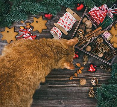 Katze inmitten von Weihnachtsdeko