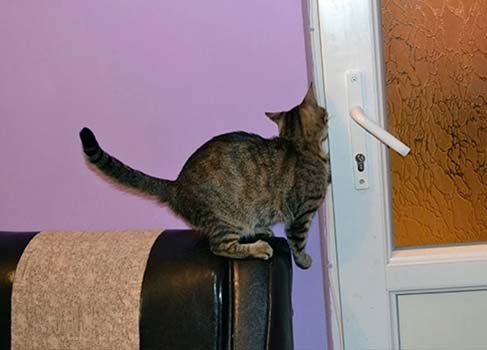 Katze an der Tür
