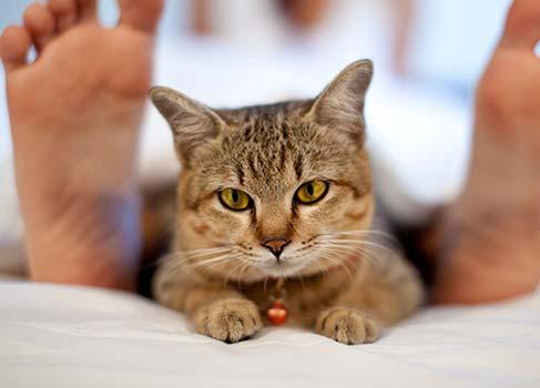 Katze mit gelbbraunen Augen