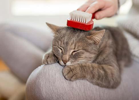 Katze wird gebürstet