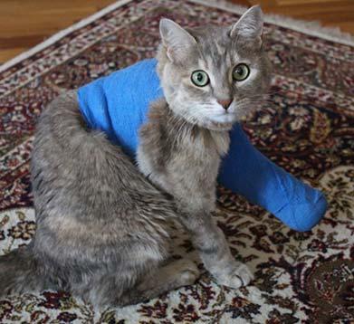 Katze mit Gips
