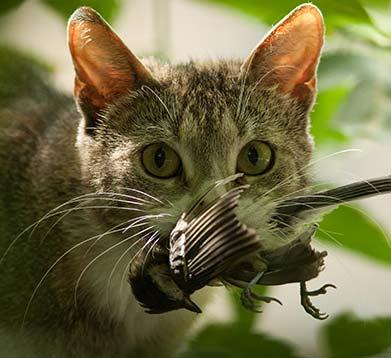 Katze mit Vogel im Maul