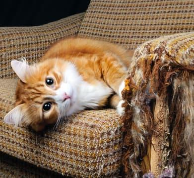 Katze auf dem Sessel