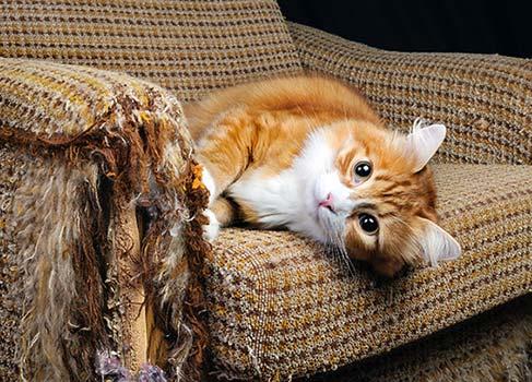 Katze auf zerkratztem Sofa