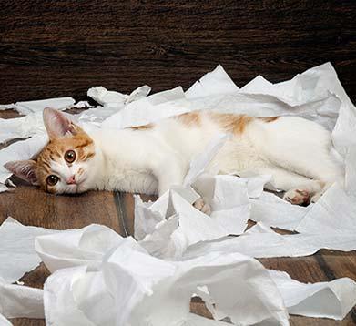 Katzenerziehung durch Belohnung und Lob