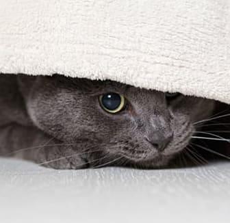 Katze unter der Decke