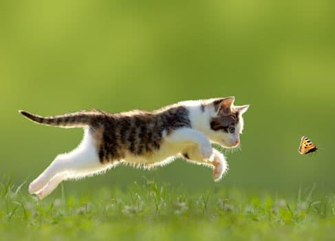 Katze jagt Schmetterling