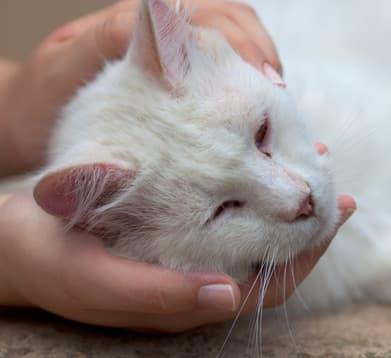Katze wird versorgt