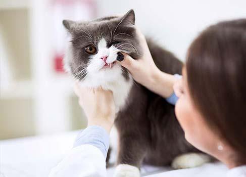 Zahnkontrolle bei der Katze