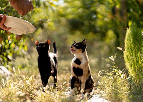 Zwei Katzen im Garten