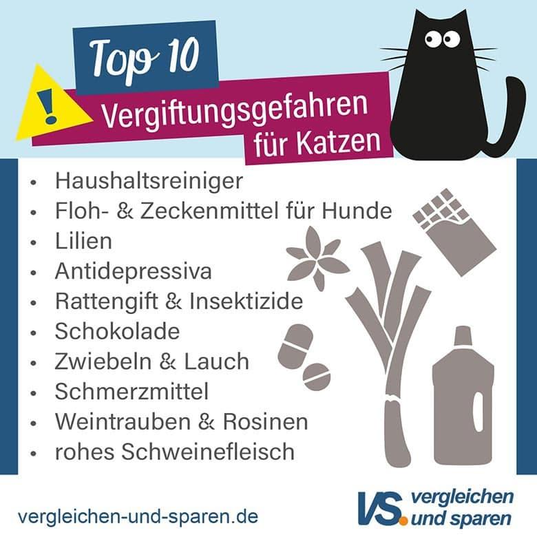Top 10 - Vergiftungsgefahren für Katzen