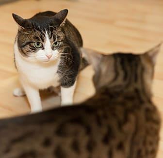 Katze wird gemobbt